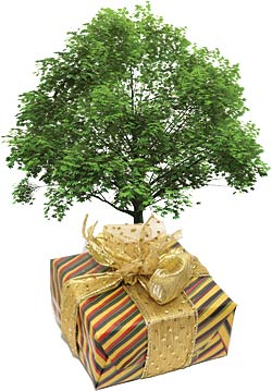 Trees for you in each donation package